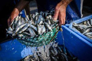 Surto em embarcações de pesca-portugal-mileniostadium