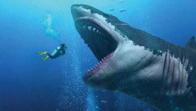Photo of Maior Tubarão já existente