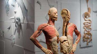 O que o seu corpo significa-canada-mileniostadium