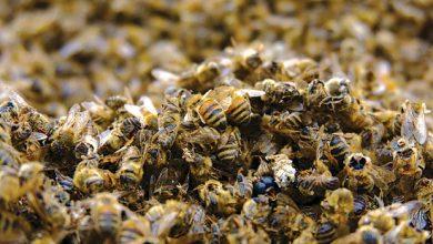 Salvar a Biodiversidade-mundo-mileniostadium