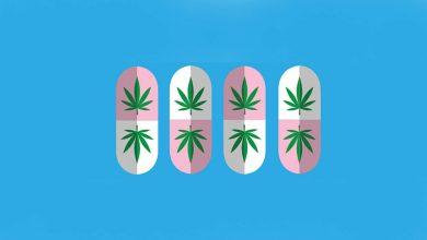 milenio stadium - voxpop - cannabis2