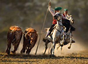 Almeirim, terra de touros, campinos-portugal-mileniostadium